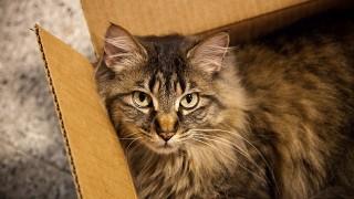 シュレーディンガーの猫の話の流れを分かりやすくまとめる。量子の世界の不可思議な話