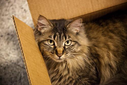 量子力学における有名な思考実験「シュレーディンガーの猫(シュレディンガーの猫)」。